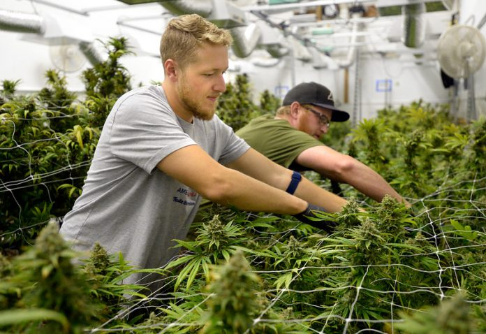 marijuana-jobs leafedout.com